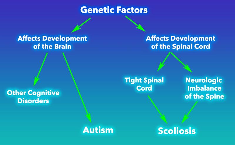 Genetic Factors Link between Scoliosis and Autism