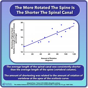 Graph showing vertebrae rotation in scoliosis is related to the short spinal cord and spinal canal